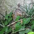 「夜の森探検隊」前夜調査