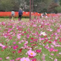 埼玉県・大宮花の丘へ行きました 2016年10月