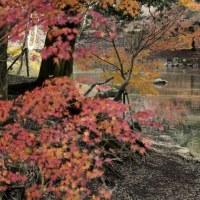 奈良公園・浮見堂周辺
