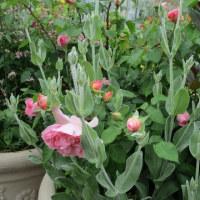 助演賞の草花