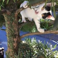 くーさん、必死に木に登る