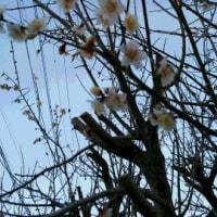 春は着々と