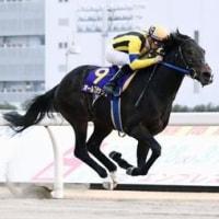 川崎記念2017 またもや新たなダートGⅠ馬が誕生!オールブラッシュが会心の逃げ切り勝ち。