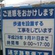 富雄川沿道の歩道敷設工事でクサフジの群落消滅!