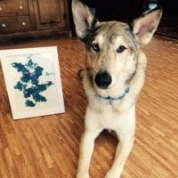 画家になった狼犬のクー