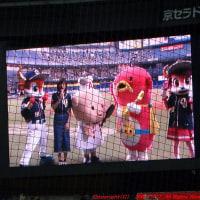 柳沢慎吾の長ーい始球式を見に行く