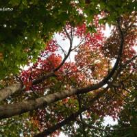 えびの高原県道1号線紅葉~ちょっぴり紅葉した樹も