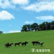 【サマーセール2017(Summer Sale、1歳馬)】の「追加上場馬26頭」が発表!(計1,307頭が確定)