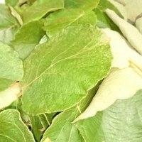 キウイの葉っぱで染め物!(ノ´∀`*)