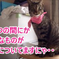 猫の首輪が知らぬ間にすり替わっていた?