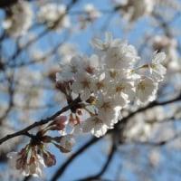 """季節の上生菓子 ・・ 『花かご』 + 子どもたちと 春休み ♪"""""""