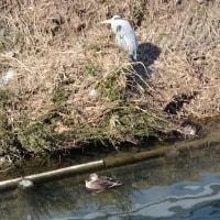 秋篠川の散策
