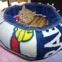 ねこベッドをまたまた作ったよ!