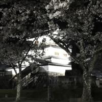 白石城の夜桜