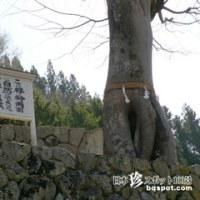 夫婦木(みょうとぎ)神社