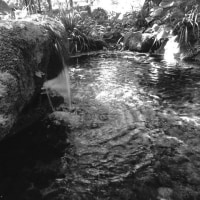 「妙見様湧水~マイナスイオンを浴びて~」