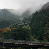 三瀬曲渕の紅葉2(ヨシ)