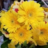 10月25日 明日の誕生花・ゆかりの花 花言葉は?(*^O^*)☆