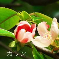 殿ケ谷戸庭園の野花たち