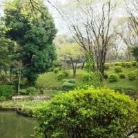有栖川宮公園でお花見