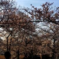 昨日の上野公園