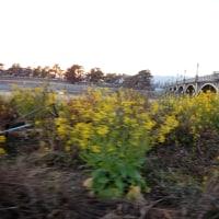 夕暮れ迫る武庫川左岸(宝塚~尼崎)のグラベルコースを走る 後篇