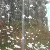 あらまっ…雪が( ̄▽ ̄;)