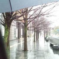 雨の街路樹