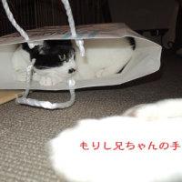 猫ってホント面白い(*^_^*)