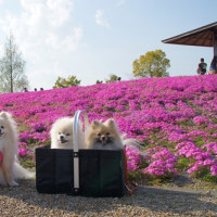 咲いた 咲いた・・・@三つ又池公園