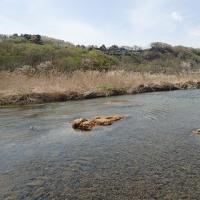 【記録】2017年4月16日 多摩川羽村堰下流