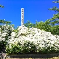 【鶴ヶ岡城】城址公園の滝藤