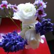2016年度最後の「お花買い」