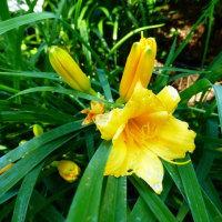 梅雨入りしたのに、東山植物園 ・・・ 名古屋市