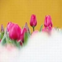 春を・・・・