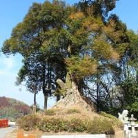 八幡神社その3(曽於市大隅町岩川)