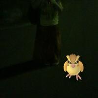 日本霊能者連盟の無料心霊写真鑑定サービスに。公園でポケモンGOをしていてポケモンがいたので記念撮影。霊が映った。見て!