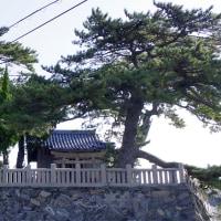 南あわじ市 沼島・弁天神社の松