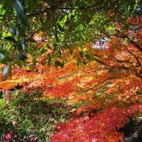 2016年 最後の紅葉狩り ~ 白野江植物公園