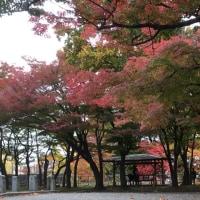 紅葉の盛岡公園。