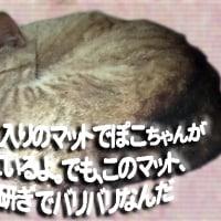 カジキの味噌漬け弁当/ぽこちゃん