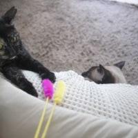 保護猫レイちゃん引っ越し、マンソン裂頭条虫でた〜!