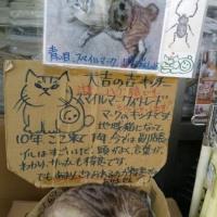 今日の猫たち(=^ェ^=)