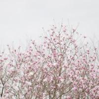 春の散歩♪