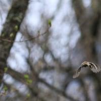 5月25日(木)  北信州へ(2) キバシリ巣立ち