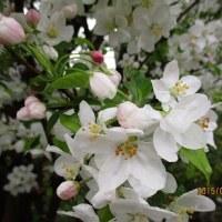 4月 春爛漫