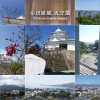 小田原城と曽我梅林ハイキング