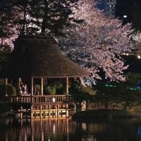 夜桜 ライトアップ・縮景園 170409