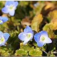 谷中湖の小さな春