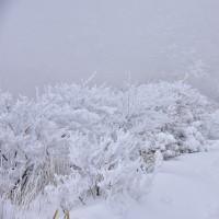 冬の沓掛山へ・・・【いな】